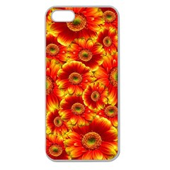 Gerbera Flowers Nature Plant Apple Seamless Iphone 5 Case (clear)