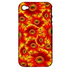 Gerbera Flowers Nature Plant Apple Iphone 4/4s Hardshell Case (pc+silicone)