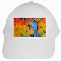 Spring Parrot Parrot Feathers Ara White Cap
