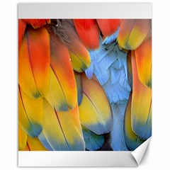 Spring Parrot Parrot Feathers Ara Canvas 16  x 20
