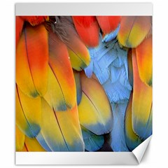 Spring Parrot Parrot Feathers Ara Canvas 20  x 24
