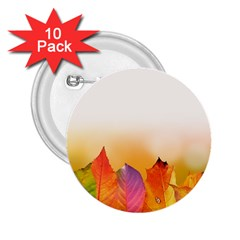 Autumn Leaves Colorful Fall Foliage 2 25  Buttons (10 Pack)