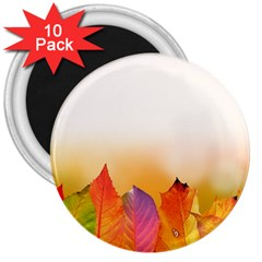 Autumn Leaves Colorful Fall Foliage 3  Magnets (10 Pack)