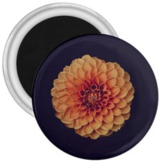 Art Beautiful Bloom Blossom Bright 3  Magnets