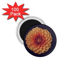 Art Beautiful Bloom Blossom Bright 1 75  Magnets (100 Pack)