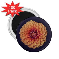 Art Beautiful Bloom Blossom Bright 2 25  Magnets (100 Pack)