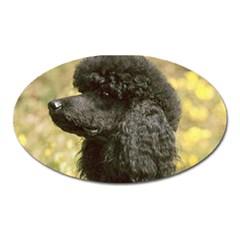 Poodle Black Oval Magnet