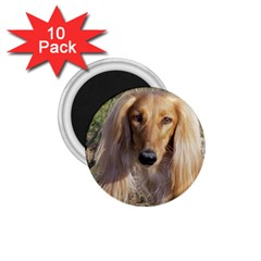 Saluki 1.75  Magnets (10 pack)