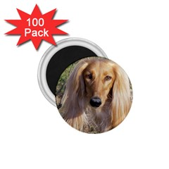 Saluki 1.75  Magnets (100 pack)