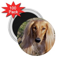 Saluki 2.25  Magnets (100 pack)
