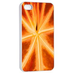 Red Leaf Macro Detail Apple Iphone 4/4s Seamless Case (white)