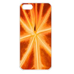 Red Leaf Macro Detail Apple Iphone 5 Seamless Case (white)