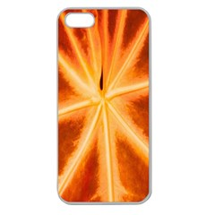 Red Leaf Macro Detail Apple Seamless Iphone 5 Case (clear)