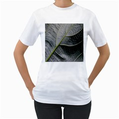 Leaf Detail Macro Of A Leaf Women s T Shirt (white) (two Sided)