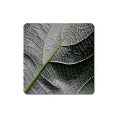 Leaf Detail Macro Of A Leaf Square Magnet