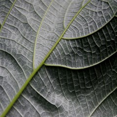 Leaf Detail Macro Of A Leaf Magic Photo Cubes