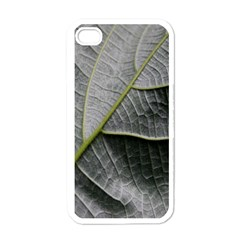 Leaf Detail Macro Of A Leaf Apple Iphone 4 Case (white)