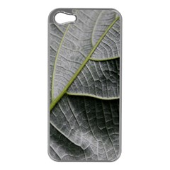 Leaf Detail Macro Of A Leaf Apple Iphone 5 Case (silver)