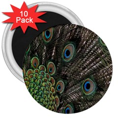 Close Up Of Peacock Feathers 3  Magnets (10 Pack)