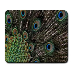 Close Up Of Peacock Feathers Large Mousepads