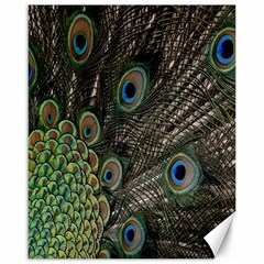 Close Up Of Peacock Feathers Canvas 16  X 20