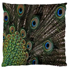 Close Up Of Peacock Feathers Large Cushion Case (one Side)