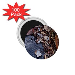 Transition 1 75  Magnets (100 Pack)