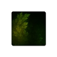 Beautiful Fractal Pines In The Misty Spring Night Square Magnet