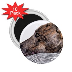 Greyhound 2.25  Magnets (10 pack)