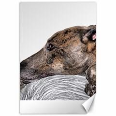 Greyhound Canvas 12  x 18