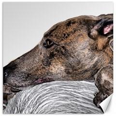 Greyhound Canvas 20  x 20