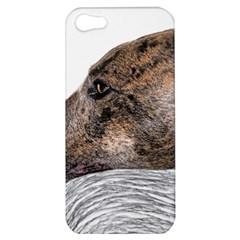 Greyhound Apple iPhone 5 Hardshell Case