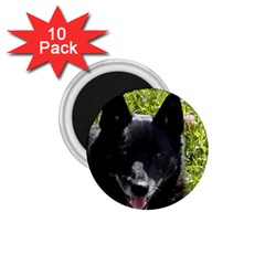 Norwegian Buhund 1.75  Magnets (10 pack)