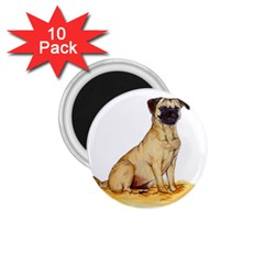 Pug Color Drawing 1.75  Magnets (10 pack)