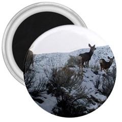White Tail Deer 1 3  Magnets