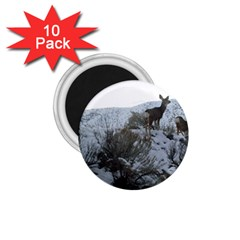 White Tail Deer 1 1.75  Magnets (10 pack)