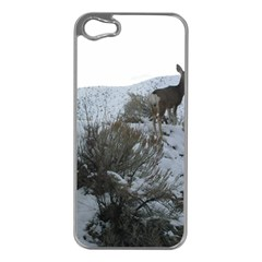 White Tail Deer 1 Apple iPhone 5 Case (Silver)
