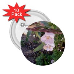 Wildflowers On The Boise River 2.25  Buttons (10 pack)