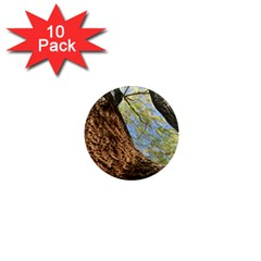 Willow Tree Reaching Skyward 1  Mini Magnet (10 pack)