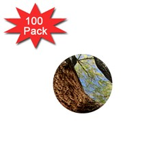 Willow Tree Reaching Skyward 1  Mini Magnets (100 pack)
