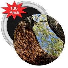 Willow Tree Reaching Skyward 3  Magnets (100 pack)