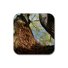 Willow Tree Reaching Skyward Rubber Square Coaster (4 pack)