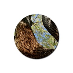 Willow Tree Reaching Skyward Rubber Round Coaster (4 pack)