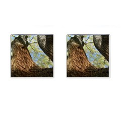 Willow Tree Reaching Skyward Cufflinks (Square)