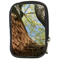 Willow Tree Reaching Skyward Compact Camera Cases