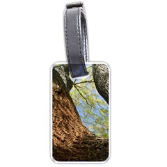 Willow Tree Reaching Skyward Luggage Tags (Two Sides)