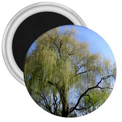 Willow Tree 3  Magnets