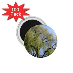 Willow Tree 1.75  Magnets (100 pack)