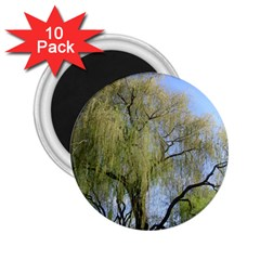 Willow Tree 2.25  Magnets (10 pack)