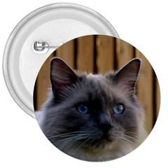 Ragdoll, Blue 3  Buttons